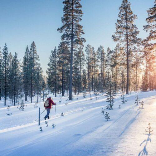 Personne faisant du ski de fond entre les sapins au soleil couchant