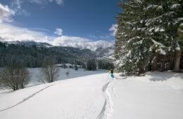 Skieur laissant ses traces dans la poudreuse