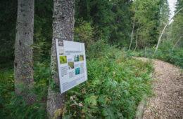 Chemin de forêt et panneau explicatif Géopark Chablais