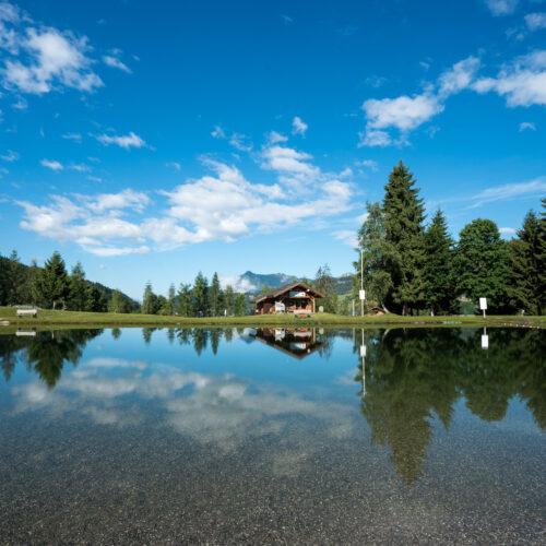 Lac en été avec pelouse, sapins et ciel bleu