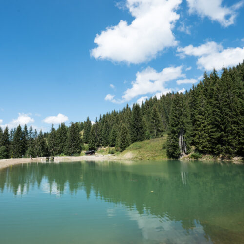 Lac en été avec forêt de sapins à droite et ciel bleu