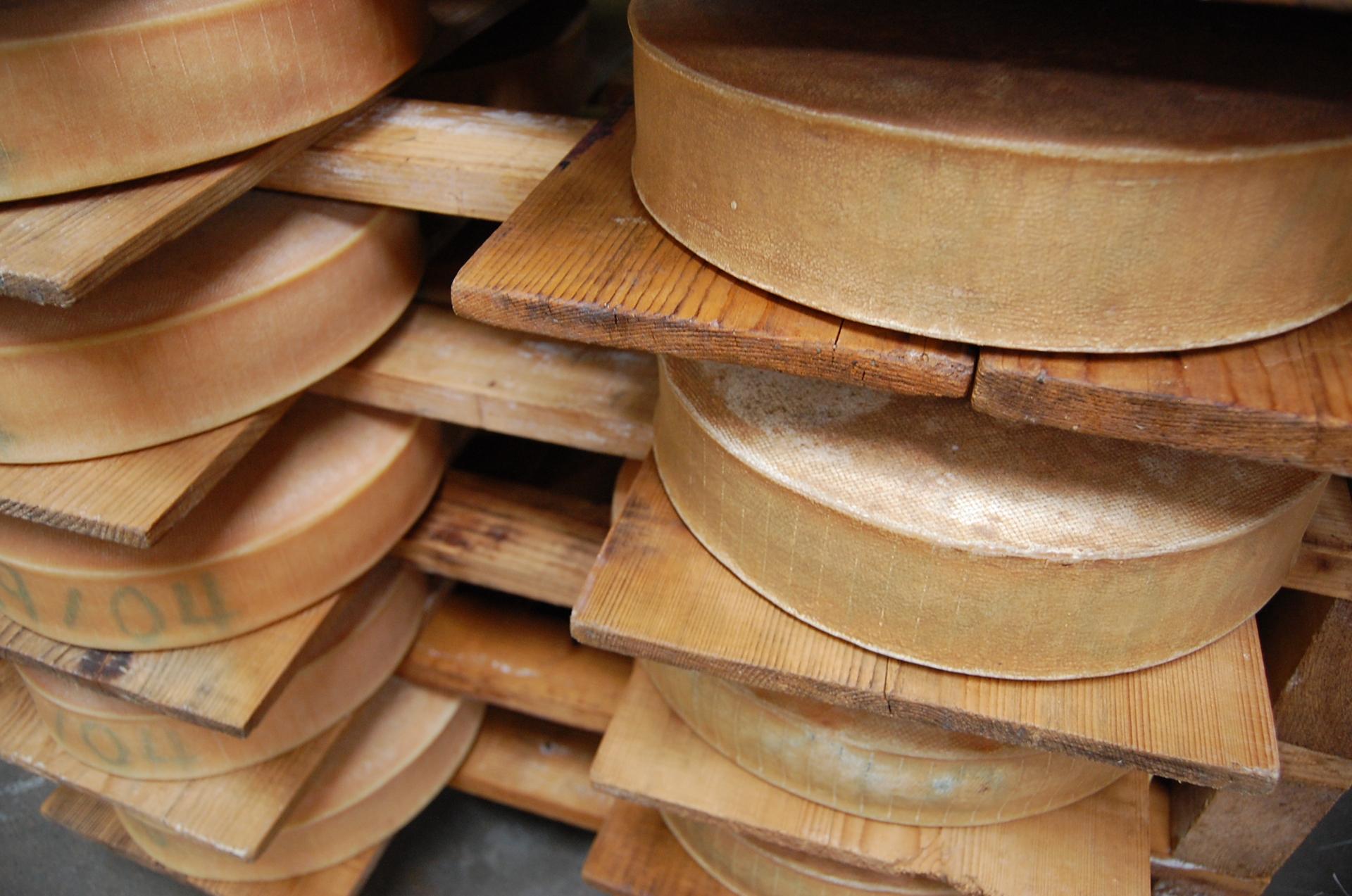 Meules de fromages en affinage