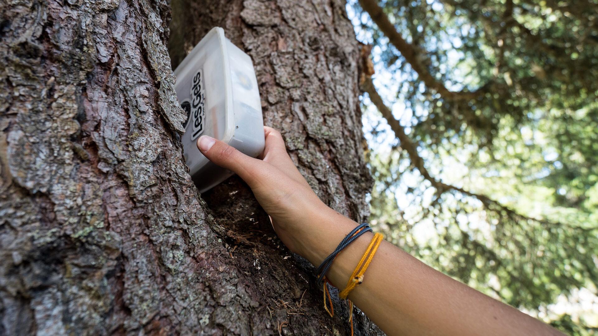 Main attrapant une boite cachée dans un arbre