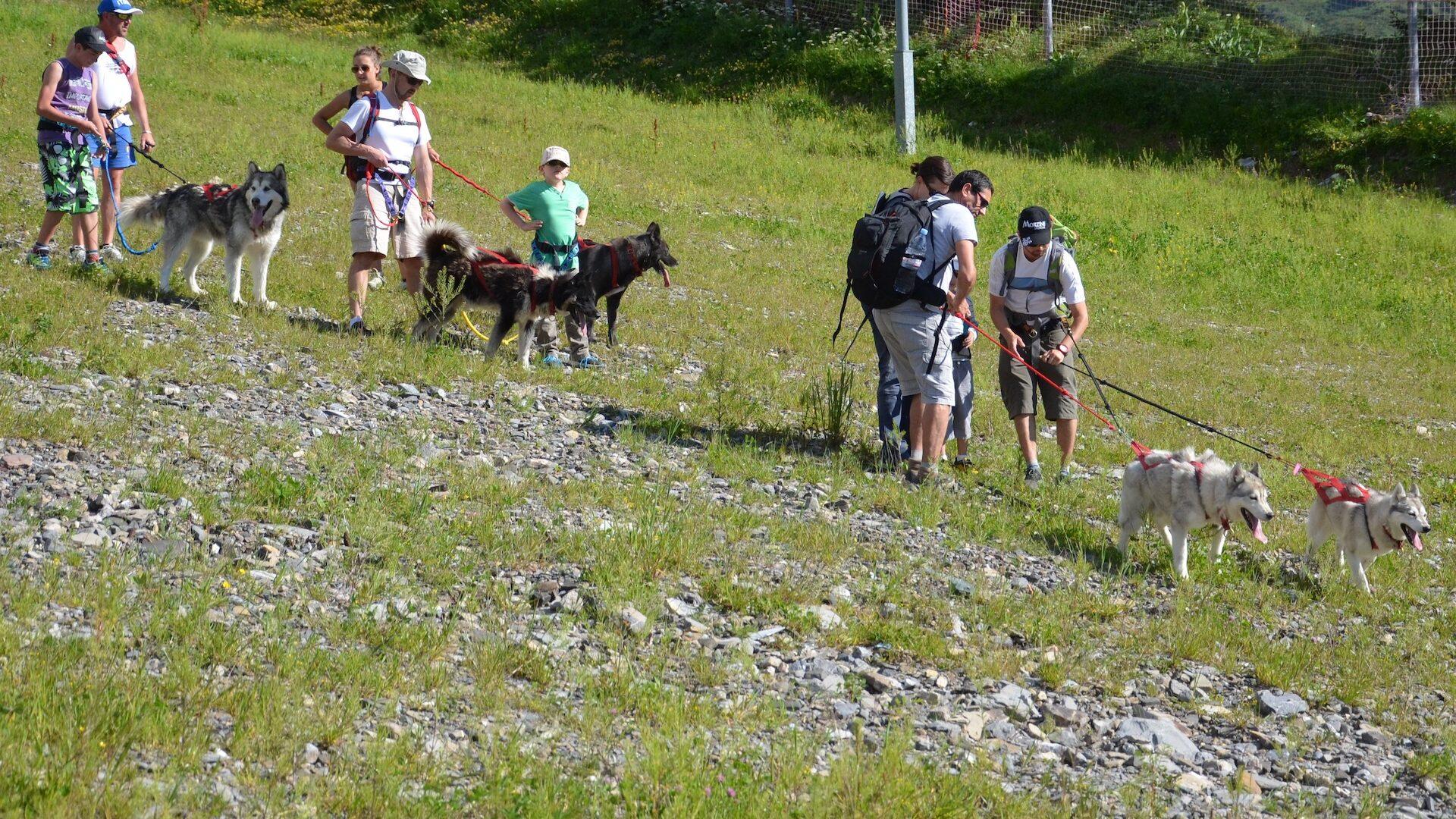 Groupe faisant une balade en été arnachés à des chiens