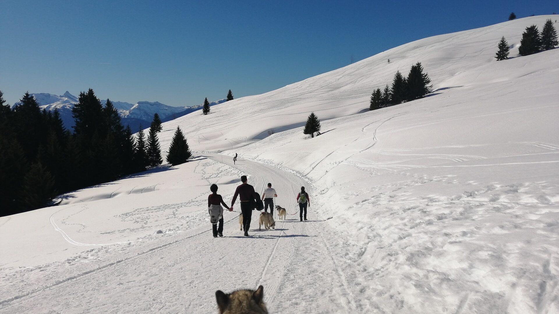 Groupe faisant une balade à pied en hiver arnachés à des chiens