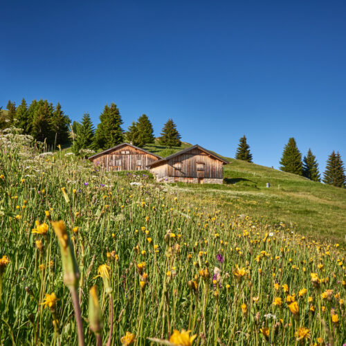 Paysage montagne en été avec fleurs sauvages et chalets