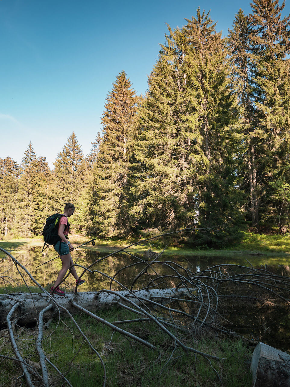 randonnée dans les bois en été aux Gets